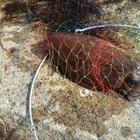 【AbuGarcia】Micro Jig FLAT PHOTO CONTESTのコウイカ釣果
