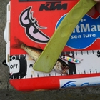 【AbuGarcia】Micro Jig FLAT PHOTO CONTESTのムツ釣果