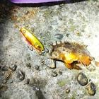 【AbuGarcia】Micro Jig FLAT PHOTO CONTESTのハオコゼ釣果