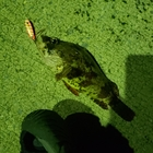 【AbuGarcia】Micro Jig FLAT PHOTO CONTESTのヨロイメバル釣果