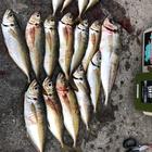 【DUO】TETRAWORKS アジングビンゴ 4月のアジ釣果