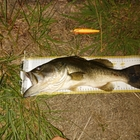 【BIWAKO】dpBATTLE2019 6月の釣果