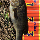 【ALL JAPAN】dpBATTLE2019 6月の釣果
