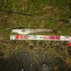 第5回【週間でかいもの勝ち】なまずを釣ろうの釣果