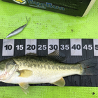 【BIWAKO】dpBATTLE2019 7月の釣果