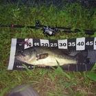 【ALL JAPAN】dpBATTLE2019 7月の釣果
