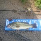 【KAESU】ライキリ2019の釣果