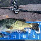 【BIWAKO】dpBATTLE2019 8月の釣果