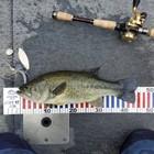 【ALL JAPAN】dpBATTLE2019 8月の釣果