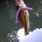 【Berkley】Berkley限定イベント秋の釣果