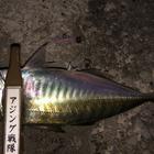 【DUO】TETRAWORKS アジングビンゴ 10月のアジ釣果