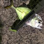 【DUO】TETRAWORKS アジングビンゴ 10月のギンガメアジ釣果