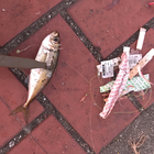 【DUO】TETRAWORKS アジングビンゴ 10月の釣果