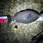 【イシグロ】メジナダービー2019 秋の釣果