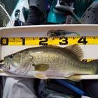 【BIWAKO】dpBATTLE2019 10月の釣果