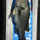 【ALL JAPAN】dpBATTLE2019 10月の釣果
