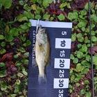 【ALL JAPAN】dpBATTLE2019 11月の釣果