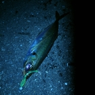 【DUO】TETRAWORKS アジングビンゴ 12月の釣果