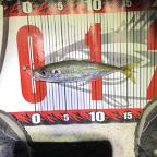 【DUO】TETRAWORKS アジングビンゴ 2月のアジ釣果