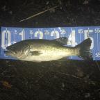 【琵琶湖】For Professionalの釣果