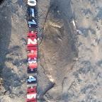 【イシグロ】ヒラメ・マゴチダービーの釣果