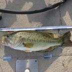【琵琶湖】アブ・バークレイトーナメント2018の釣果