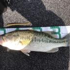 【琵琶湖】アブ・バークレイトーナメント2018のラージマウスバス釣果