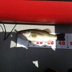 【琵琶湖】アブ・バークレイトーナメント2018のブラックバス釣果
