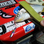 【AbuGarcia】Micro Jig FLAT PHOTO CONTESTのショゴ釣果