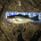 【Valleyhill@琵琶湖】2018年度3月大会の釣果