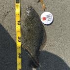 第2回【ヒラメ】イシグロ焼津店×DUO大会のヒラメ釣果