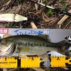 【ALL JAPAN】dpBATTLE2019 4月の釣果