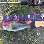 【ALL JAPAN】dpBATTLE2019 5月のブラックバス釣果