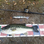 【ALL JAPAN】dpBATTLE2019 5月のラージマウスバス釣果