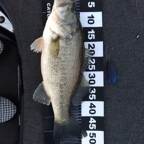 【BIWAKO】dpBATTLE2019 4月の釣果
