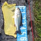 【BIWAKO】dpBATTLE2019 5月の釣果