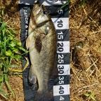 2018 dpBATTLE【EASTERN】8月の釣果