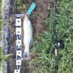 2018 dpBATTLE【WESTERN】8月の釣果