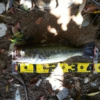 2018 dpBATTLE【WESTERN】4月の釣果