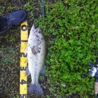 2018 dpBATTLE【WESTERN】5月の釣果