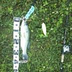 2018 dpBATTLE【WESTERN】6月のラージマウスバス釣果