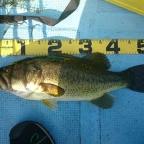 DUO大会(琵琶湖)の釣果