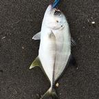 第二回DUOヒラメ大会の釣果