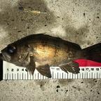 ECOGEAR presents 全国メバルのクロメバル釣果