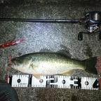 2月ブラックバス(琵琶湖)の釣果
