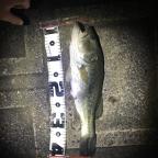 GEECRACK大会(南関東・山梨)の釣果