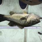GEECRACK大会(関西)の釣果