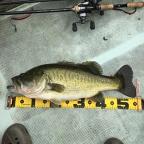 KAESU第二回大会@琵琶湖の釣果