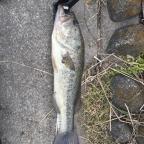 JACKALL大会(南関東)の釣果