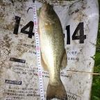 JACKALL大会(九州・沖縄)の釣果